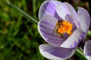 A méhpempő összetevői, hatóanyagai és hatásai